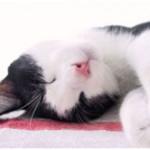 Slapende kat - spierpijn