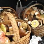 Gegrilde paddenstoelen op de barbecue