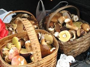 Mandje met paddenstoelen