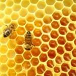 honingbij-werkzaamheid-honing