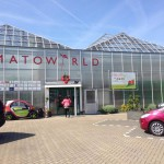 Opening healthy food academy in tomatoworld