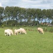 Open-boerderijdag-weiland