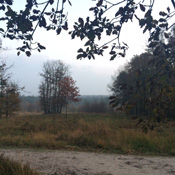 Rust opzoeken in het bos
