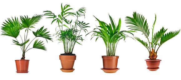Luchtzuiverende planten slaapkamer