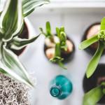 Luchtzuiverende planten in de slaapkamer of in de woonkamer.
