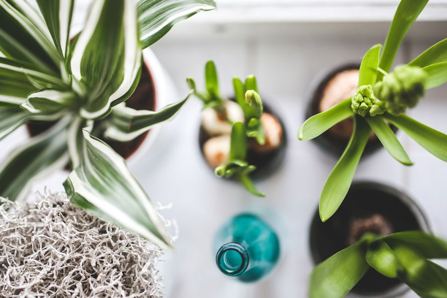 luchtzuiverende planten in de slaapkamer of in de woonkamer