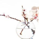 Magnolia, mooi en gezond!