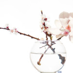 Magnolia gezond?
