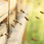 bijen-kast-koudgeslingerde-honing-gezond