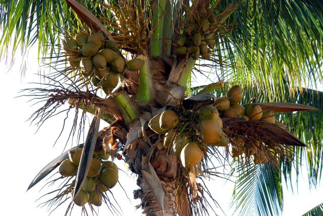 Kokosolie multifunctioneel