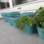 Inspiratie Stadstuinieren, moestuintjes in kleine tuintjes