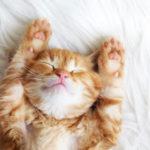 Slaapverwekkende tips...