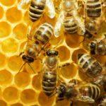 Bijenproducten, zoals honing een natuurlijk medicijn?