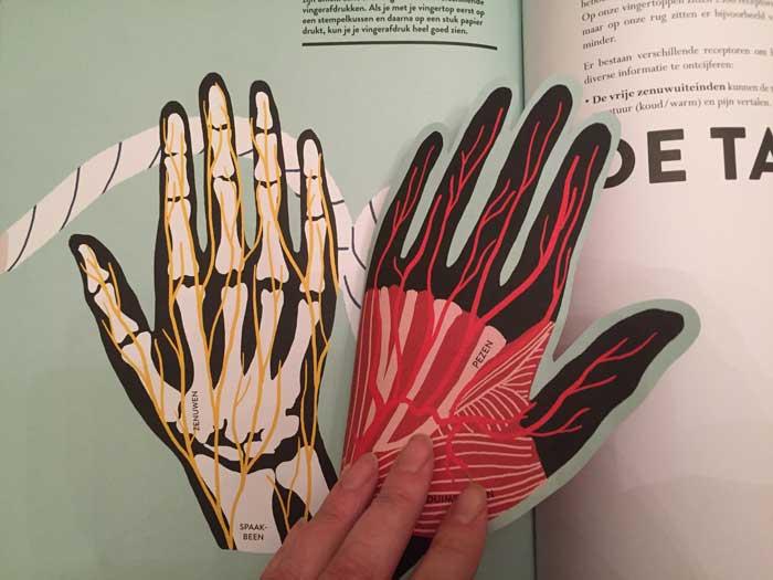 Uitklapboek anatomie