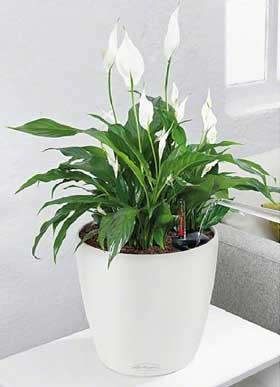De beste luchtzuiverende planten