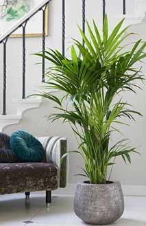 Goede gezonde luchtzuiverende planten