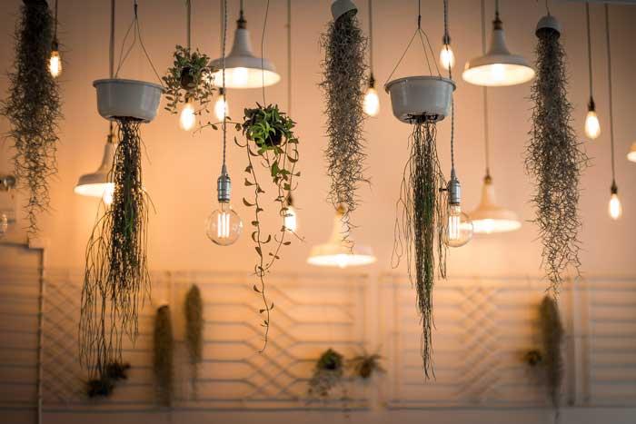 Luchtzuiverende planten in je huis
