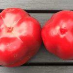 Mannelijke of vrouwelijke paprika?