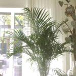Planten die goed voor je gezondheid zijn en goed voor een stijlvol interieur!