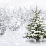 Kerstboom, denneboom, gezellig en gezond