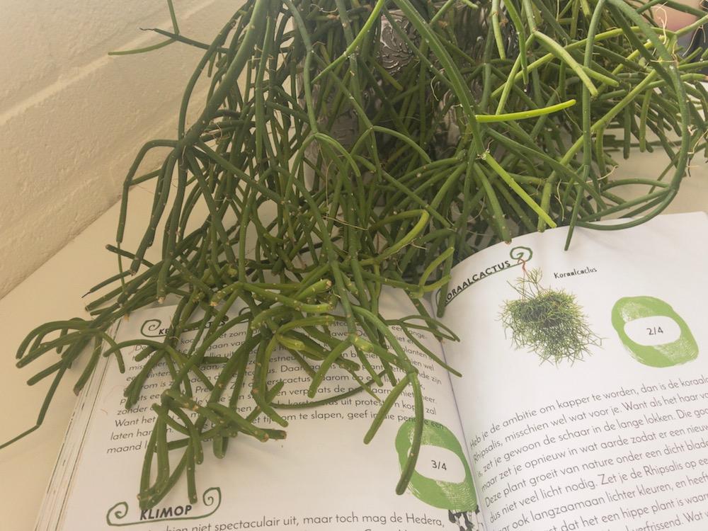 Een groener en gezonder huis met tips uit dit leuke boek My Green House