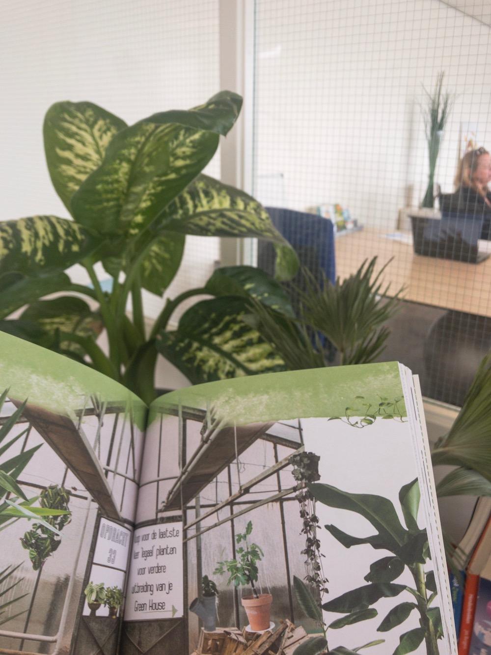 Planten op kantoor en in huis - hoe onderhoud je ze?