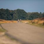 Bewegen in de zomervakantie: stap eens wat vaker op de fiets