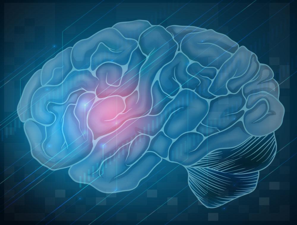 Feiten over je hersenen die de meeste mensen niet weten