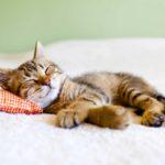 Relaxen kun je leren | stress reduceren
