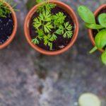 Van Basilicum tot Tijm: De keukenkruid ABC