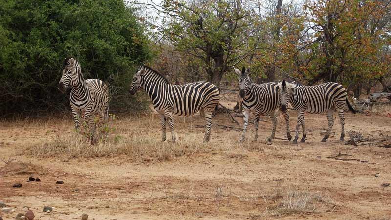 Op vakantie naar Zuid-Afrika, Krugerpark