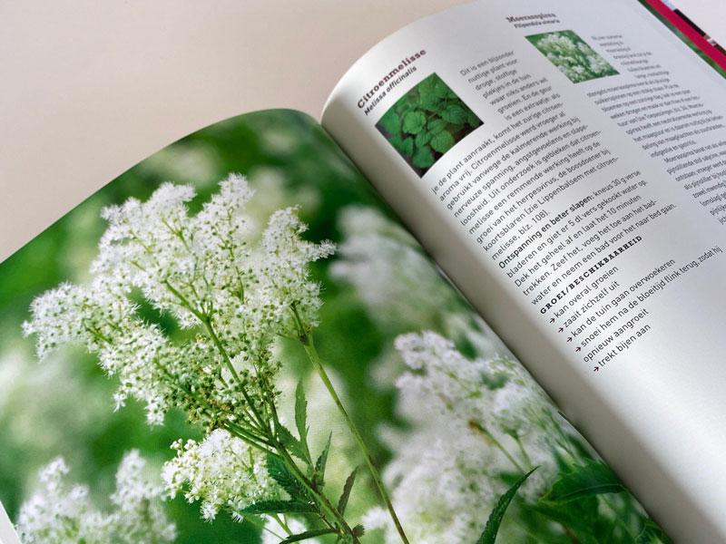 Bloemen, planten en vruchten die helpen tegen diverse kwaaltjes