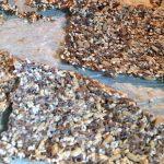Recept zadencrackers zonder ei