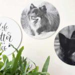 Voor- en nadelen van een hond voor je gezondheid
