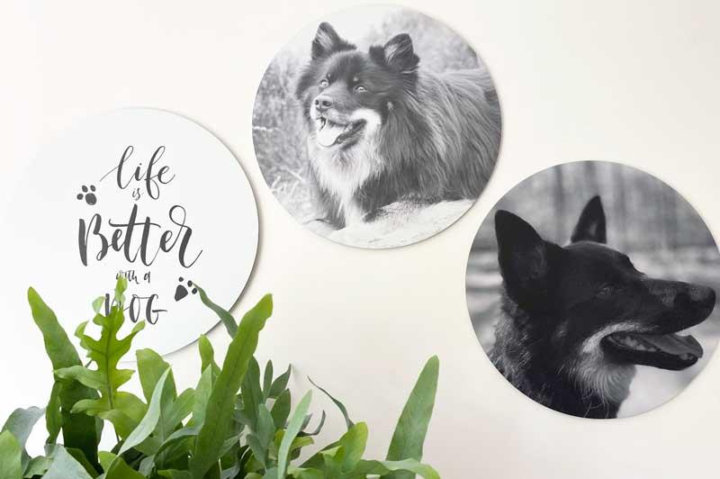 Honden gezond? Zie mijn honden op deze foto-muurcirkels!