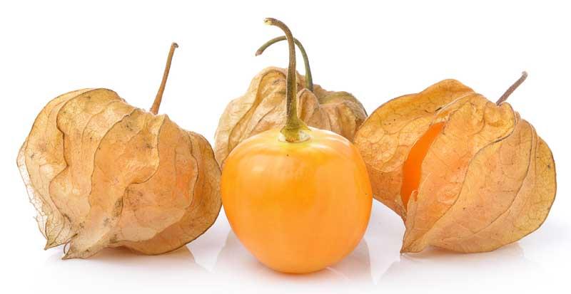 Physalis, ook wel lampionvrucht. Een onbekende fruitsoort.