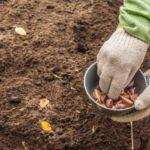 Gezond en lekker voedsel uit eigen tuin
