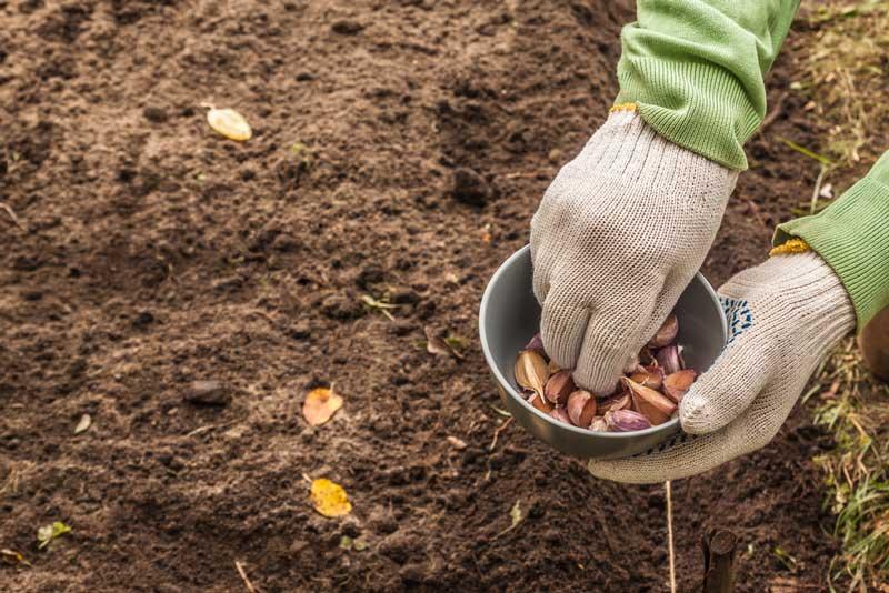 Gezonde voeding uit eigen tuin